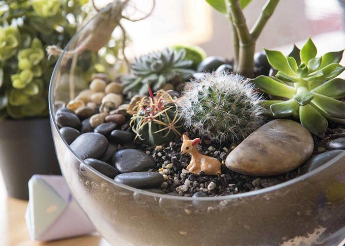 How To With Zoe Green Terrarium